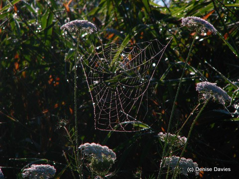 Jeweled web