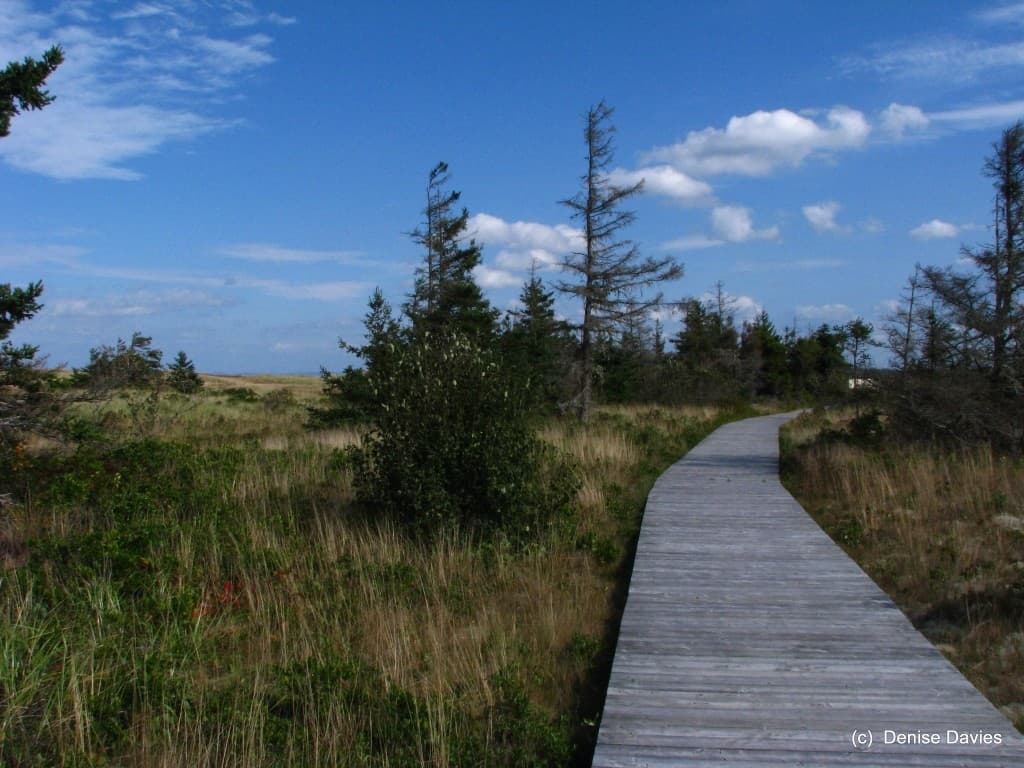 Pomquet Beach Interpretive Trail